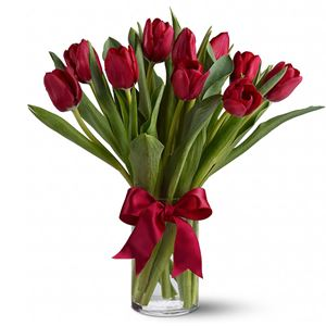 Image of 6961 Red Tulips from Rose of Sharon Florist