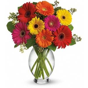 Image of 6191 Gerbera Brights from Lompoc Florist & Flower Shop