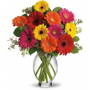 Image of 6192 Gerbera Brights  from Lompoc Florist & Flower Shop