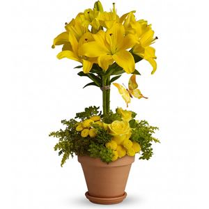 Image of 6006 Yellow Fellow from Lompoc Florist & Flower Shop