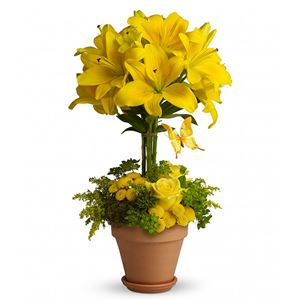 Image of 6007 Yellow Fellow  from Lompoc Florist & Flower Shop
