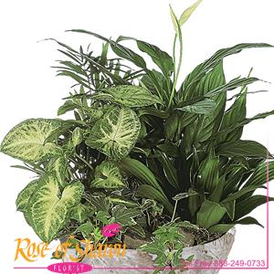 Image of 1031 Signature Garden Design from Santa Maria Florist