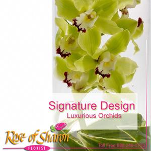 Image of 1037 Signature Orchid Design from San Luis Obispo Flower Shop