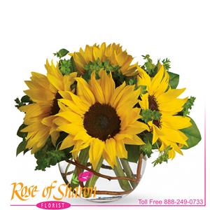 Image of 1916 Sunny Sunflowers from Rose of Sharon Florist