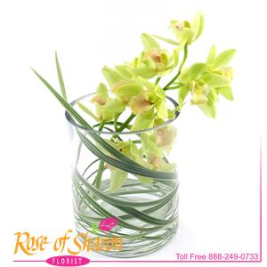 Image of 2018 Miniature Cymbidium Vase from Rose of Sharon Florist