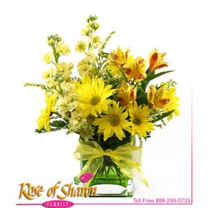 Image of 2087 Jaune from Mister Florist