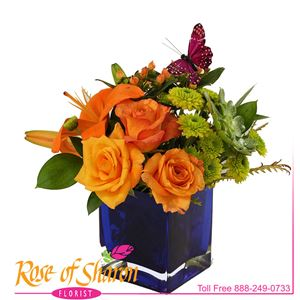 Image of 2440 Arianna from Lompoc Florist & Flower Shop