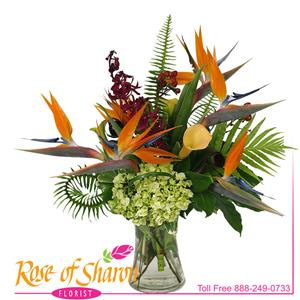 Arrabella is a stylish vase arrangement of Birds of Paradise, Mokara Orchid, mango Calla and fern in a gathered glass vase. As it is designed to be viewed from all sides it is perfect for a table arrangement.