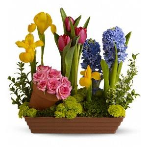Passover Flowers from Rose of Sharon Florist