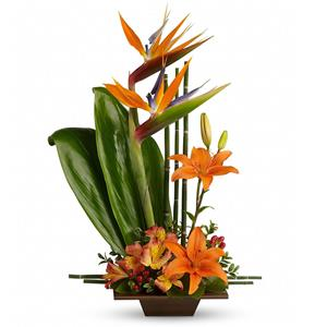 Image of 6380 Exotic Grace from Rose of Sharon Florist