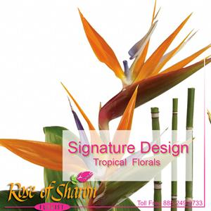 Signature Tropical Design
