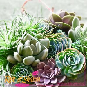 Succulent Custom Garden