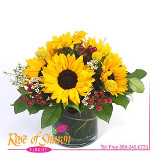 Image of 1943 Ravi from Rose of Sharon Florist