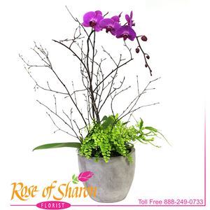 Image of 1955 Keane Orchid Garden from Rose of Sharon Florist