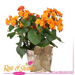 Autumn Plants from Rose of Sharon Florist