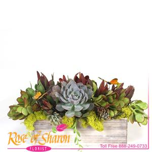 Image of 1984 Nolan Succulent Arrangement from Rose of Sharon Florist