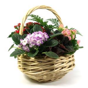 Basket Garden