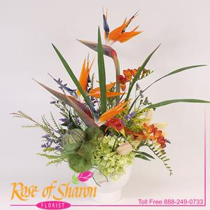 Image of 2026 Luna from Rose of Sharon Florist