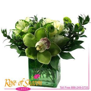 Image of 2035 Lots of Green from Rose of Sharon Florist