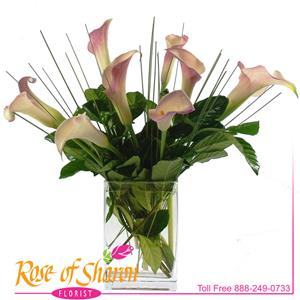 Image of 2059 Calla from Rose of Sharon Florist