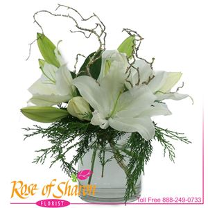 This lush and low arrangement of fragrant, white, Orchid lilies nestled atop cypress is a perfect winter gift. Arranged in a high quality glass cylinder.