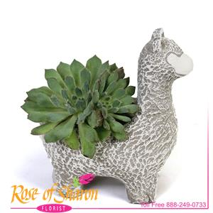 Succulents from Rose of Sharon Florist