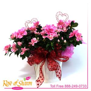 Blooming Plants from Rose of Sharon Florist
