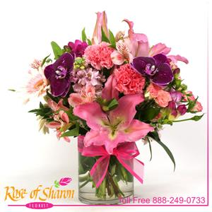 Image of 2371 Delight from Rose of Sharon Florist