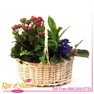 Plant Garden Basket - Small