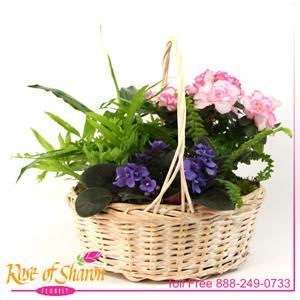 Plant Garden Basket - Medium