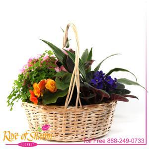 Plant Garden Basket - Large