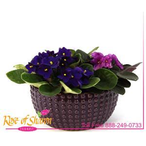 Violet Garden in Ceramic