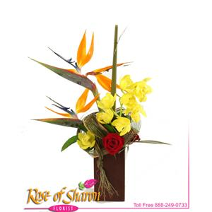 Image of 2441 Avis from Rose of Sharon Florist