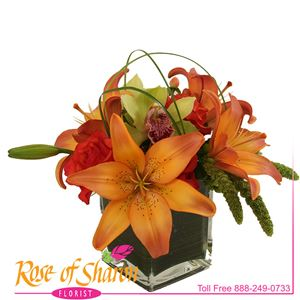 Image of 2443 Hazan Posy from Rose of Sharon Florist