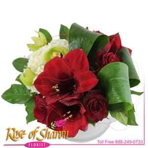 Image of 2480 Kama from Rose of Sharon Florist
