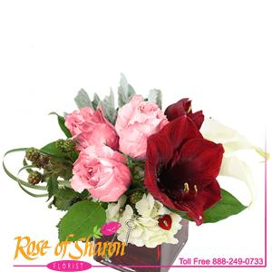 Image of 2481 Kanza from Rose of Sharon Florist