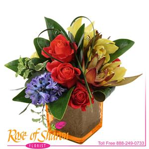 Cubes & Cylinder from Rose of Sharon Florist