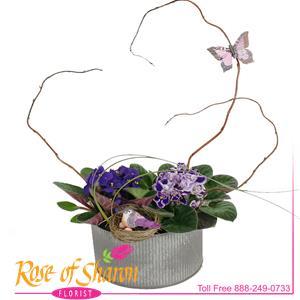 Violet Garden in Norah Bowl