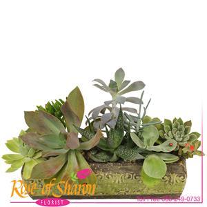 Kamali Succulent Garden