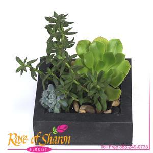 Rylee Planter
